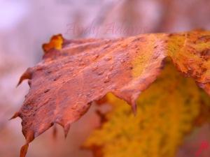 Macro Leaves Dew flat
