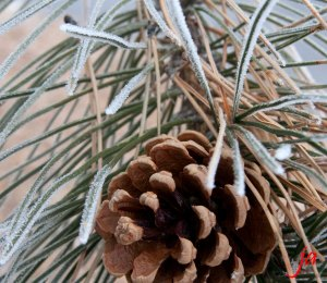 pine cone flat
